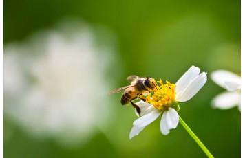 WE WELCOME BEES ON BALCONIES!