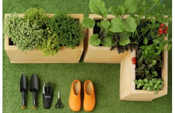 GARDEN AT HOME? HERE ARE THE FRIENDLY PLANTS