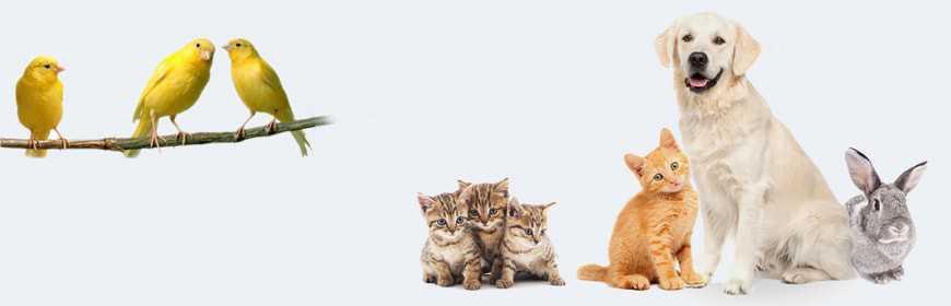 Pet, tutto per il benessere di tuoi animali