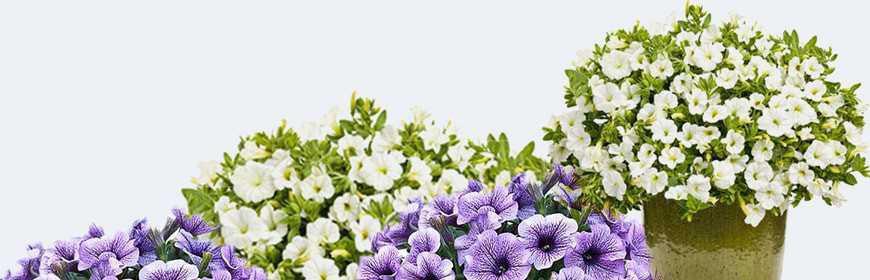 Pflanzen und Samen